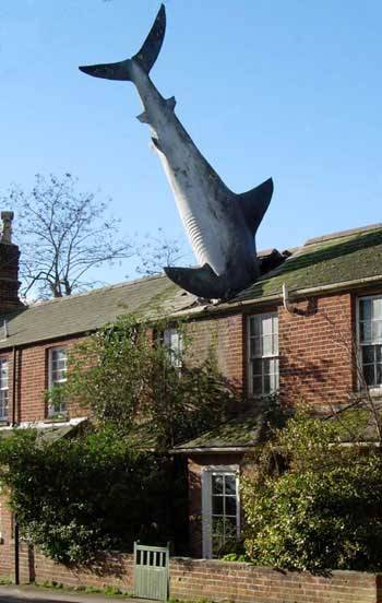 Shark In A Roof Crazy Or Compelling Property